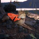View Image 3 of Track Safety Dog Jacket by RuffWear - Blaze Off