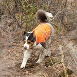 View Image 2 of Track Dog Jacket by RuffWear - Blaze Orange