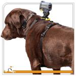 View Image 4 of Tru-Fit Dog Harness with Camera Mount by Kurgo
