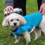 View Image 3 of Ultimate Cooling Dog Coat by Canine Equipment