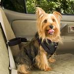 View Image 2 of Vehicle Safety Pet Harness
