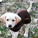 View Image 1 of Wagga Wool Dog Coat - Chocolate Brown