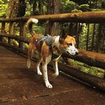 View Image 1 of Web Master Dog Harness by RuffWear - Twilight Gray