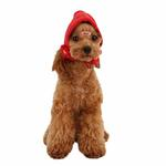 View Image 1 of Yuppie Dog Hat by Puppia - Red