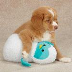 View Image 1 of Zanies Snuggly Owlets Dog Toy - Blue