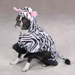 Zebra Dog Costume by Zack & Zoey