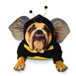 View Image 1 of Zelda Bumblebee Halloween Dog Costume