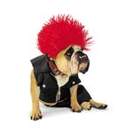 Punk Rock Halloween Dog Costume by Zelda