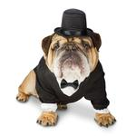 View Image 1 of Zelda Tuxedo Halloween Dog Costume