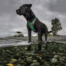 Allagash Adventure Dog Harness by Kurgo