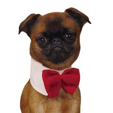 Aria Dapper Dog Bowtie - Red Velvet