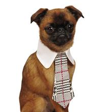 Aria Heritage Collection Dog Necktie
