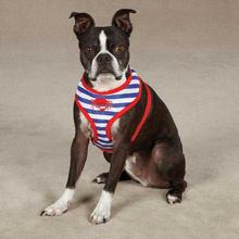 Beachcomber Dog Harness by Zack and Zoey - Nautical Blue