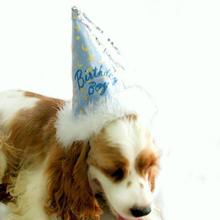 Birthday Boy Party Hat