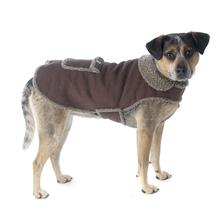 Cheyenne Dog Coat - Brown