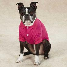 Blooming Brights Dog Polo - Raspberry