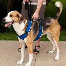 EasySport Dog Harness by PetSafe - Blue