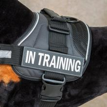EzyDog Convert Harness Custom Side Patches - In Training
