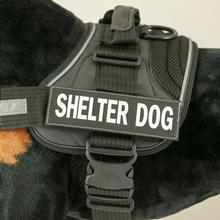 EzyDog Convert Harness Custom Side Patches - Shelter Dog