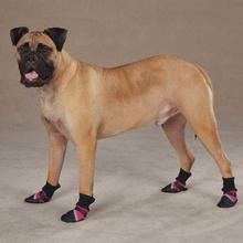 Guardian Gear Brite Dog Boots - Raspberry