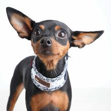 Gypsophila Dog Neckguard by Puppia - White