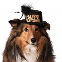 Happy New Year Dog Hat - Black