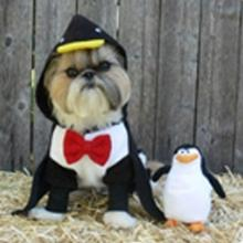 Iceberg Penguin Dog Costume