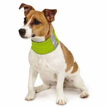 Insect Shield Dog Neck Gaiter - Fern
