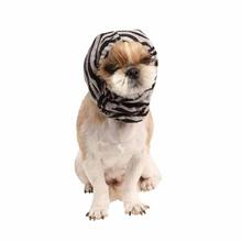 Modern Zebra Dog Snood by Puppia - Black