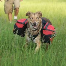 Palisades Backcountry Dog Pack by RuffWear - Red Currant