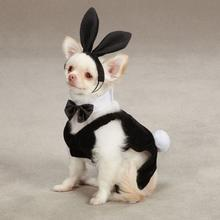 Party Hounds Bunny Halloween Dog Costume