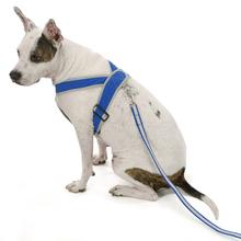 Precision-Fit Nylon Dog Harness - Sapphire