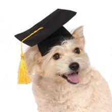 Rubies Graduation Dog Hat - Black
