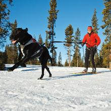 The Omnijore Joring System by RuffWear