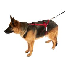 Ultra Paws Dog One Harness - Red