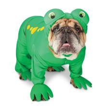 Zelda Frog Prince Halloween Dog Costume