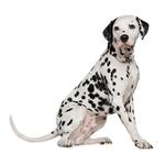 Shop for Dalmatians