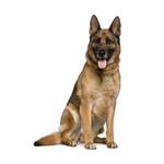 Shop for German Shepherds