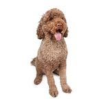 Shop for Portuguese Water Dogs