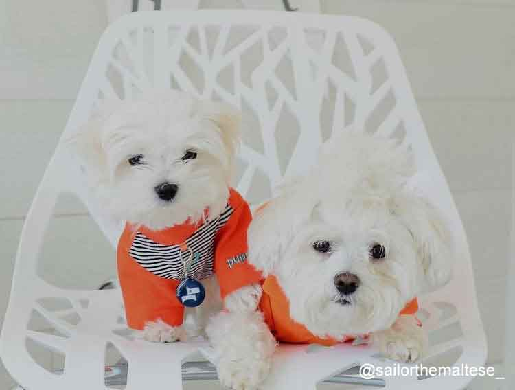 b0019408a Dog Clothes, Dog Coats & Dog Fashion at BaxterBoo