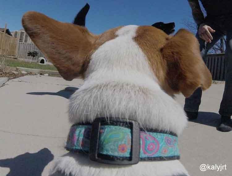 b8d85725185 Dog Clothes