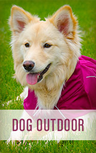 Shop All Dog Outdoor