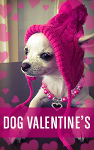 Shop All Dog Valentines