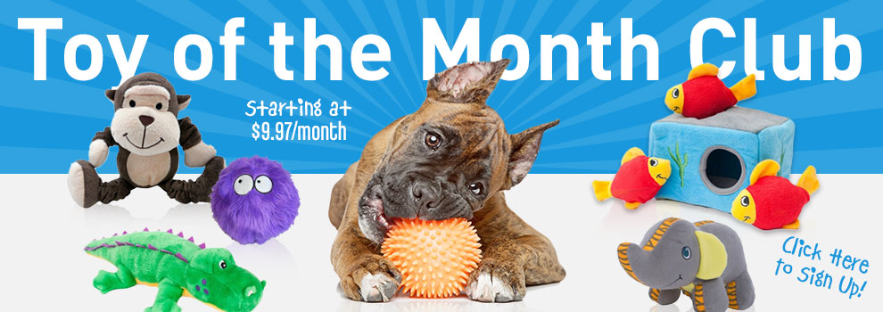 Toy of the Month!