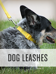 Shop All Dog Leashes