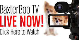 Watch BaxterBoo TV Live!