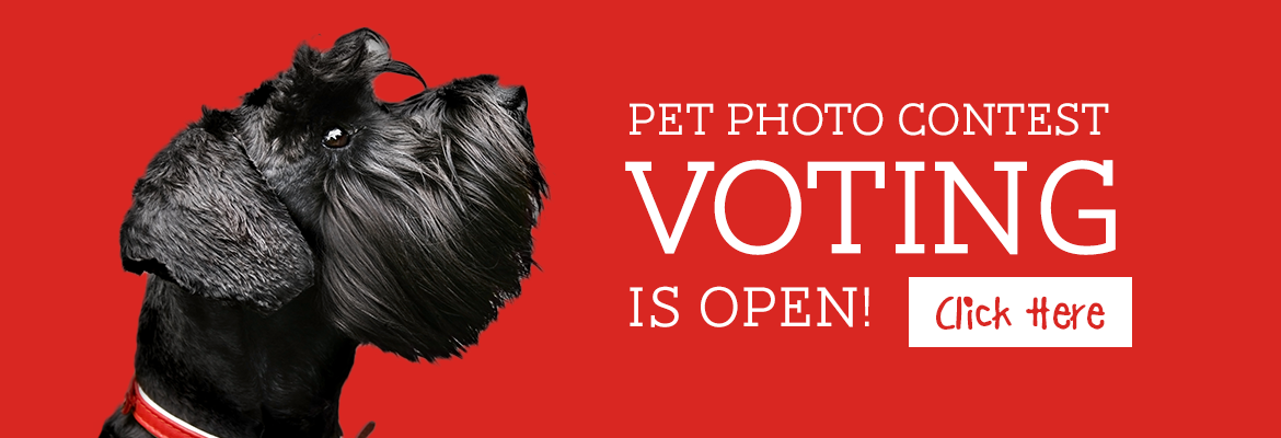 Vote for your favorite pet!