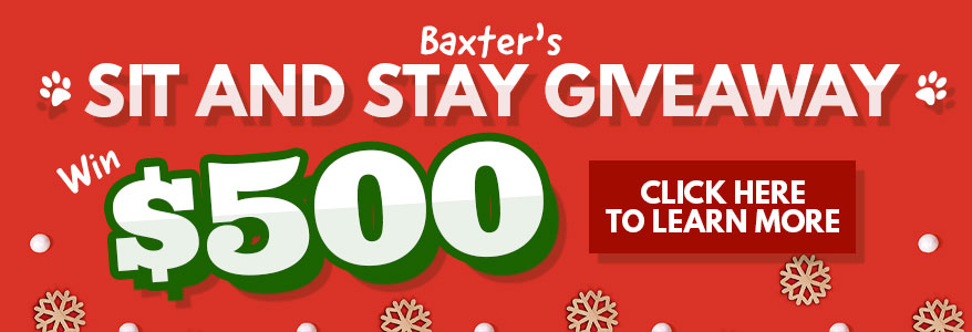 Baxter's Sit and Stay Giveaway
